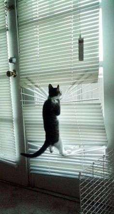 Think next time the owners should leave these blinds up!  ;)