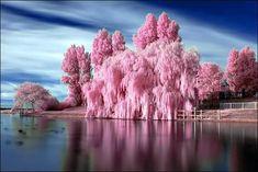 Dreamy pink landscape