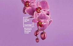 Wyjątkowe Wnętrze: {Inspiracja kolorem: Radiant Orchid - Pantone}