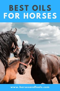 Consumption of a good oil has many health benefits for horses. It can improve coat and hoof health, soothe some gut issues, help with sore and stiff joints, and gives a boost of vitamins and minerals, depending on which type you use. The best oils for horses have to be purchased and fed to him, as he won't find any naturally occurring oils in his diet of grass and hay! We have selected three of the best oils for horses – a Flax, a Soybean and a Camelina. Equine Massage Therapy, Horse Feed, Best Oils, Horse Care, Training Tips, Health Benefits, Minerals, Grass, Vitamins