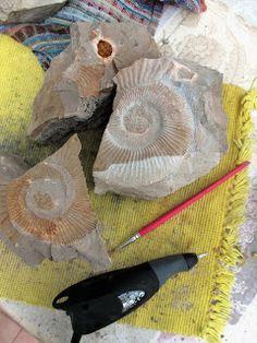 Amonite. Diário de um ProtoGeólogo : Paleontologia