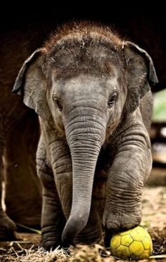 I love Elephants! look at his little hairs! This makes me smile!