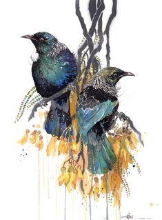Official Rachel Walker Page. New Zealand watercolour, spray paint, pen and ink artist creating splashy celebrations of native and rare animals. Watercolor Bird, Watercolor Paintings, Watercolours, Rachel Walker, Tui Bird, Illustrations, Illustration Art, Ballet Posters, Rare Animals