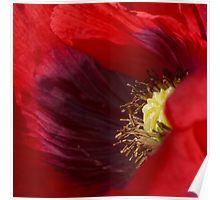 'Peek inside the poppy ' by Helen Kelly Fantasy Inn, Framed Prints, Art Prints, Poppies, Bloom, Pretty, Artwork, Bubble, Beauty
