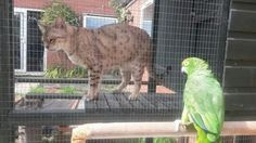 My mums bengal and parrot