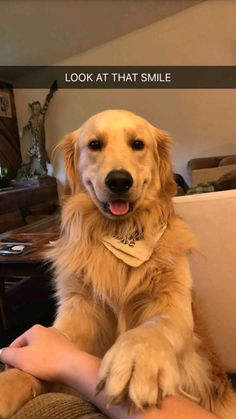 Astonishing Everything You Ever Wanted to Know about Golden Retrievers Ideas. Glorious Everything You Ever Wanted to Know about Golden Retrievers Ideas. Cute Dogs And Puppies, Baby Dogs, I Love Dogs, Doggies, Lab Puppies, Cute Little Animals, Cute Funny Animals, Funny Dogs, Chien Golden Retriever