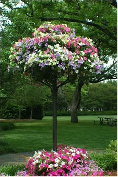 Petunia Tree. I've never seen one of these.