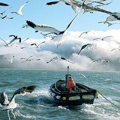 Anchovy fishing on the San Francisco Bay Sport Fishing, Fishing Boats, Flora, Yacht Cruises, Fishing Vessel, Fishing Photography, Life Aquatic, San Francisco Bay, Northern California
