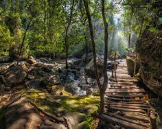 size: Photographic Print: Sunny Day at Tropical Rain Forest Landscape with Wooden Bridge. Cambodia by Im Perfect Lazybones : Landscaping Around House, Landscaping Work, Phnom Kulen National Park, Delta Du Mekong, Angkor Temple, Vietnam, Forest Design, Beautiful Forest, Forest Landscape