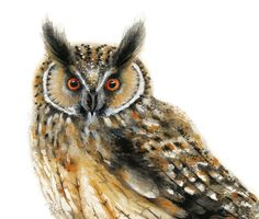 Items similar to Owl art Fred bird 4 X 6 print - 4 for 3 Sale on Etsy Owl Watercolor, Watercolor Paintings, Owl Kids, Wildlife Decor, Matou, Bee Art, Nature Illustration, Baby Owls, Art Wall Kids