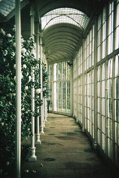 #nutmegcomp Wollaton Hall Orangery