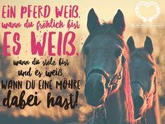Horse Love, Horse Girl, Paint Horse, Fan Shirts, Horse T Shirts, Horse Quotes, How To Slim Down, Horseback Riding, Shirt Shop