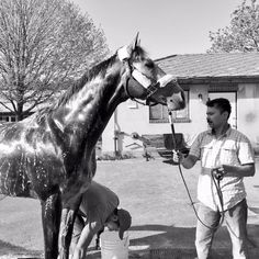 Frosted-Photos and videos by Kiaran McLaughlin (@KPMRacingStable)   Twitter