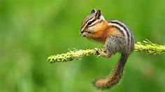 Squirrels are incredible animals! They are convenient ingenious, and surprisingly long lived. Most of the people discover squirrels over a daily schedule nevertheless know little about them.