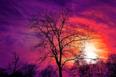 Free Image on Pixabay - Tree, Bare Tree, Sunset, Sky