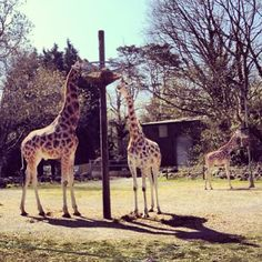 Paignton Zoo Environmental Park, Paignton. Just 25 minutes by car from Devon Valley