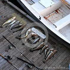 Photo about Results of fishing at Levanger in Norway. Image of fishes, plank, levanger - 67115808 Image Of Fish, Plank, Norway, Fishing, Stock Photos, Bulletin Boards, Planks, Peaches, Gone Fishing