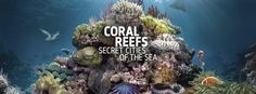 Visit #CoralReefs: Secret Cities of the Sea at the Natural History Museum until 13 September 2015. #Museum #NHM #NaturalHistory