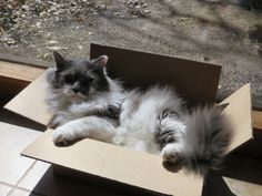 The Z, at repose in his new box.