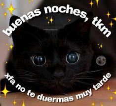 Cute Cat Memes, Cute Love Memes, Funny Memes, Memes Lindos, Romantic Memes, Sad Cat, Love Phrases, Wholesome Memes, Reaction Pictures