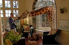 A CUP OF JO: Travel Fantasy~ The Giraffe Hotel, South Africa~ (just can't wait to show to my hubby! Giraffe Manor Hotel, Cup Of Jo, Nairobi, South Africa, Places To Go, Fantasy, Pets, Giraffes, Elephants