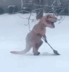 A blizzard is bearing down on you, it's freezing and heavy snow is keeping you indoors. So what do you do for fun? … Dress up as a Tyrannosaurus rex and shovel some powder, obviously.