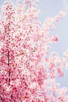 ...spring has sprung !