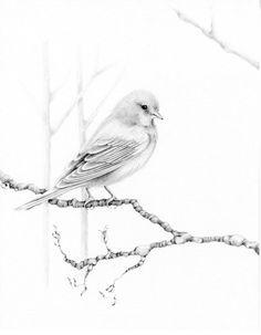 私手描画図スケッチ元ウッドランド鳥鉛筆図面黒と白の鳥鉛筆図面美術ジクレー プリント