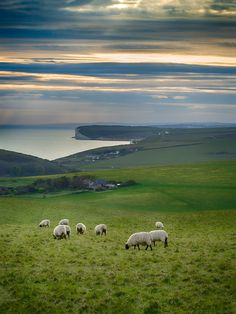 FUCKITANDMOVETOBRITAIN — wanderthewood:   Sussex, England by nooker72