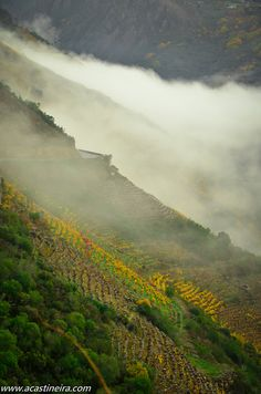 Viñedos de la Ribeira Sacra acariciados por la niebla. Galicia. Spain