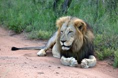 'Cecil Bill' May End Trophy Hunting In America Let's be the voice for all animals.