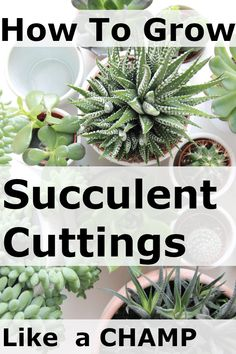Growing Succulent Cuttings (Great Must Watch Video and Tips!) - DIY Crafty Projects This is a must watch video on growing succulent cuttings, showing the complete steps for removing. Plus tips for how to make your succulents succeed! Propogate Succulents, Baby Succulents, Succulent Cuttings, Succulent Landscaping, Growing Succulents, Succulent Gardening, Succulents In Containers, Planting Succulents, Propagating Cactus