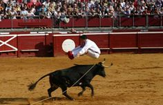 Féria in the landes. One of the events of the day is usually the Course Landaise, dancing with the bulls!