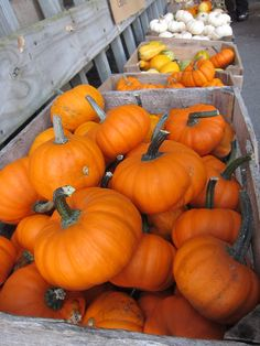 Pumpkins at the local cider mill <3