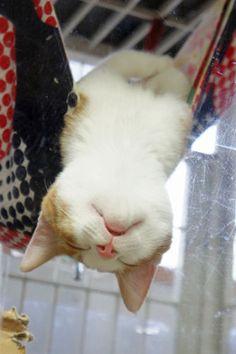 sleepy kitten ねむねむ…