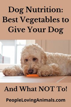 Dog Nutrition - Incorporating Vegetables into Your Dog's Diet dog nutrition tips, dog nutrition guide, puppy nutrition, puppy nutrition guide, dog safe vegetables, dog friendly vegetables, Pet Care, Pet Health