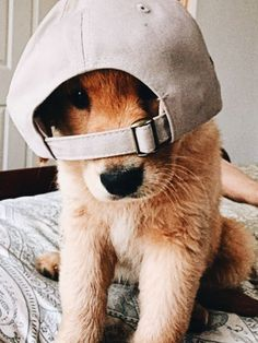 The gangster pup! Cute Funny Animals, Cute Baby Animals, Animals And Pets, Cute Puppies, Cute Dogs, Dogs And Puppies, Doggies, Cute Creatures, Mans Best Friend
