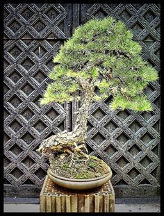 The Bonsai art in HDR