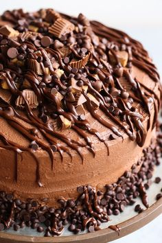 Insane Peanut Butter Cup Cake - a fudgy chocolate cake with creamy peanut butter filling and chocolate frosting.topped with tons of peanut butter cups! Peanut Butter Cups, Peanut Butter Filling, Peanut Butter Recipes, Chocolate Peanut Butter, Chocolate Desserts, Chocolate Cake, Melted Chocolate, Chocolate Frosting, Chocolate Caramels