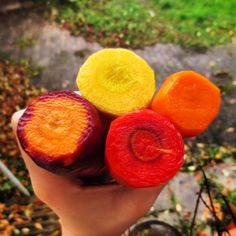 Colorful carrots ~ red, purple, yellow and orange.
