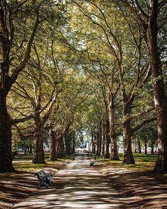 Trying something NEW! Does it looks like a painting??  .  Follow me @patrick.jarina .  #london #thequeen #buckinghampalace #palace #garden #park #painting #walking #uk #londonbaby #londoneye #buckinghamfountain #traveladdict #traveler #wanderlust #travelholic #travel #travelphotography #cityscapephotography #photographylovers #potd #pictureedit #lightroom #explore #travelexplorerepeat #wanderingaround Palace Garden, Garden Park, Buckingham Fountain, Buckingham Palace, Cityscape Photography, Travel Photography, London Eye, Try Something New, Editing Pictures