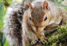 Squirrel (Eichhörnchen). I love this animals :) Golden Gate Park, Squirrel, Kangaroo, Rabbit, Animals, Swimming, Baby Bjorn, Bunny, Squirrels