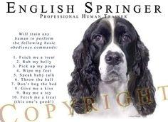 This is DEF what my Springer thinks! Springer Dog, Springer Spaniel Puppies, English Springer Spaniel, Spaniel Dog, Spaniels, Corgi Puppies, Dog Jokes, Jolie Phrase, Spaniel Breeds