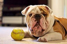 Bane. Bulldog