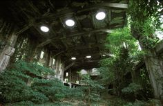 Abandoned building in Japan- empty spaces filled with life :D