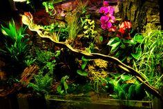 Amazingly colorful paludarium , fishes paradise