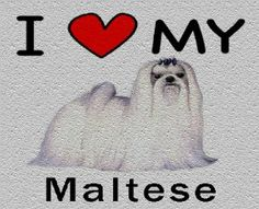 I Love My Maltese Cutting Board - Great For Kitchens by MyHeritageWear. $34.95
