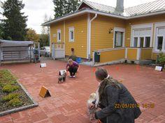 Koiravierailua Nikulassa