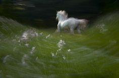 Photographer Milan Malovrh – horses