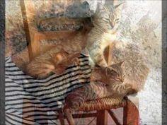 Song is released 1987 in album Oliver enjoy this song Majko Majko, djetinjstva moga vilo, Majko, sve blaženo ti bilo. Oliver Dragojevic, Music, Youtube, Croatia, Musica, Musik, Muziek, Music Activities, Youtubers